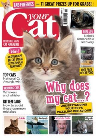 Your Cat (UK) magazine cover