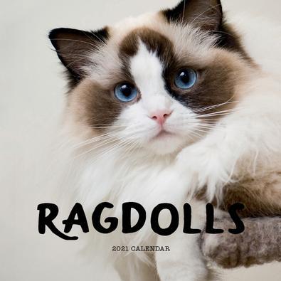 2021 Ragdolls Calendar cover