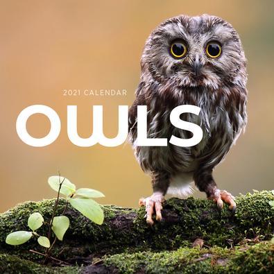 2021 Owls Calendar cover