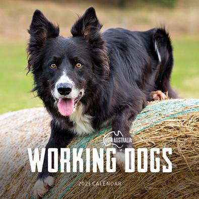 2021 Our Australia Working Dogs Calendar cover