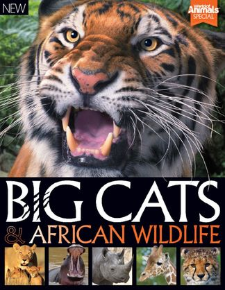 World of Animals Book of Big Cats and African Wild digital cover