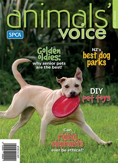 Animals' Voice (NZ) magazine cover